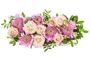Картинки Розы Хризантемы Белым фоном