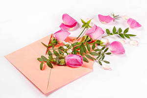 Обои Розы Белый фон Конверт Розовый Лепестки Цветы картинки