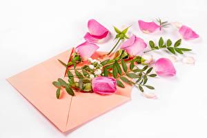 Картинка Розы Белый фон Конверт Розовая Лепестков Цветы