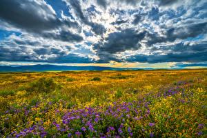 Обои США Луга Пейзаж Небо Калифорния Облака Carrizo Plain National Monument Природа картинки