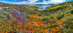 Картинки США Озеро Панорама Калифорния Diamond Valley Lake, wildflowers Природа