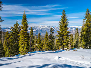Картинки Штаты Парк Калифорния Снегу Дерева Kings Canyon National Park