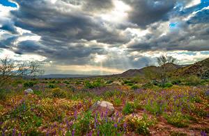 Картинки США Парк Весна Калифорния Облачно Joshua Tree National Park, wildflowers