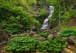 Фотографии США Парки Водопады Камни Утес Кусты Blackwater Falls State Park Virginia Природа