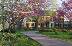 Картинка Америка Весенние Дома Цветущие деревья Газоне Кусты Berea College President's House Kentucky Города Природа