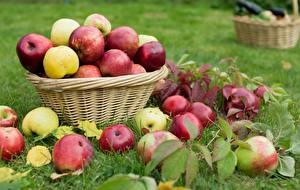 Обои Яблоки Много Корзинка Трава Листья Природа картинки