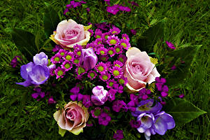 Фотография Букеты Роза Шафран Тюльпаны цветок