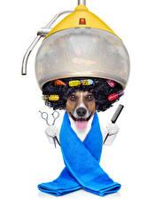 Картинка Собаки Креативные Полотенце Белый фон Джек-рассел-терьер Волосы Язык (анатомия) Смешные Животные
