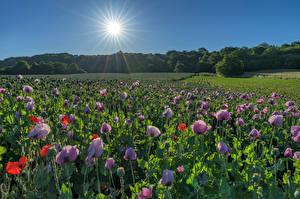 Фото Германия Поля Маки Солнце Saarland Природа