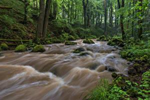 Картинка Германия Леса Реки Камень Деревья Мхом Rheinland-Pfalz Природа