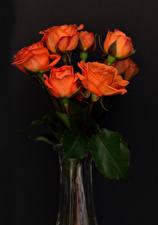 Фото Роза Сером фоне Оранжевая цветок