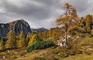 Обои Словения Осень Горы Деревьев