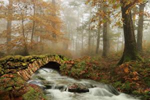 Фотография Испания Лес Осень Река Мосты Камни Деревья Тумана Мха Ziga