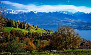 Картинка Швейцария Горы Озеро Дерева Bernese Oberland
