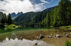 Картинки Швейцария Гора Озеро Альпы Дерево Lago de Palpuogna