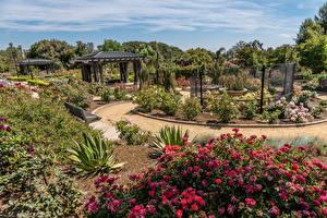 Фотография США Сады Розы Калифорния Кустов Rose Garden at South Coast Botanic Garden