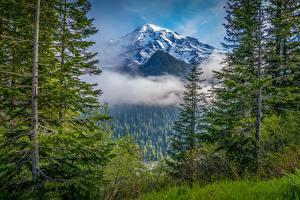 Картинка Штаты Горы Парк Леса Дерево Облачно Вашингтон Mount Rainier National Park