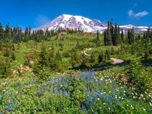 Фотография Америка Гора Парк Пейзаж Деревьев Вашингтон Mount Rainier National Park Природа