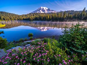 Картинка Америка Парки Горы Озеро Пейзаж Вашингтон Деревья Mount Rainier National Park Природа
