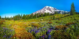 Картинка Штаты Парк Гора Люпин Пейзаж Панорама Деревьев Mount Rainier National Park