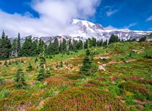 Фото Штаты Парк Гора Вашингтон Дерево Облака Mount Rainier National Park