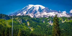 Фото США Парки Горы Пейзаж Вашингтон Деревья Mount Rainier National Park
