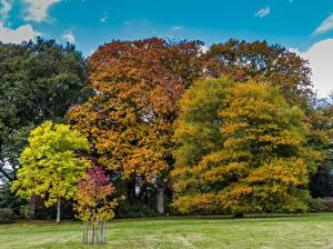 Фотографии Великобритания Осень Дерево Stourton, Wiltshire Природа