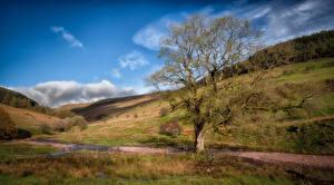 Картинки Великобритания Гора Уэльс Дерево Brecon Природа