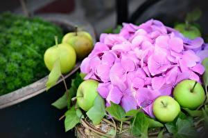 Картинки Яблоки Гортензия Боке Розовый Цветы