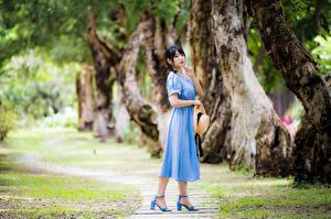 Картинка Азиатки Платье Шляпе Смотрят Размытый фон девушка