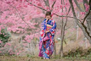 Картинка Азиаты Улыбка Кимоно Сакура Боке молодые женщины