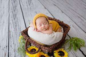 Фото Азиатка Подсолнухи Младенец Корзины Спят Дети
