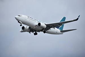 Фото Боинг Самолеты Пассажирские Самолеты 737, WestJet