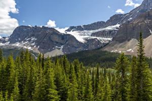 Картинка Канада Парк Горы Лес Банф Снега Природа