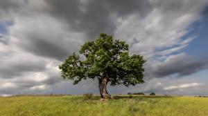 Фотография Англия Деревья Облака Траве Hertfordshire