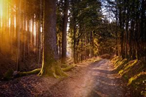 Картинки Леса Дороги Мха Дерева