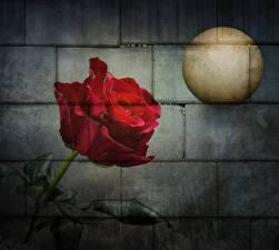 Фото Граффити Роза Стена Луны