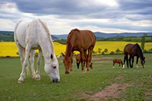 Фотография Лошадь Трава Ест Животные