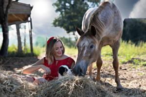 Фото Лошади Щенков Улыбка Сено Сидит Платья Marion and Sissi Девушки Животные