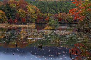 Обои Япония Парк Осенние Реки Деревьев Fukushima