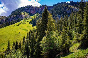 Фотография Горы Скала Дерева Naryn, Kyrgyzstan