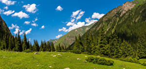 Картинка Гора Пейзаж Деревья Облака Altyn Arashan, Kyrgyzstan Природа