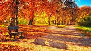 Фото Парки Осень Скамья