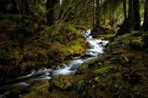Фотография Швейцария Леса Камни Ручеек Мха Деревьев Büelbach
