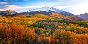 Картинки Штаты Осенние Гора Пейзаж Дерево Kebler Pass