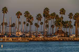 Обои США Берег Дома Пирсы Пальмы Shoreline Village Long Beach Города
