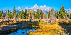 Фотографии США Парк Осенние Пейзаж Горы Деревьев Grand Teton National Park