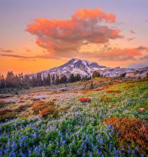 Обои США Парки Горы Люпин Пейзаж Вашингтон Облака Mount Rainier National Park Природа картинки