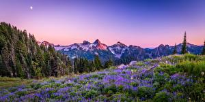 Картинка США Парк Гора Панорама Пейзаж Деревьев Mount Rainier National Park, wildflower Природа