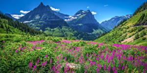 Фотография Штаты Парки Горы Пейзаж Glacier National Park, Montana Природа